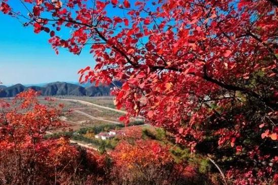 凯创园林景观行道树1.jpg