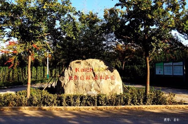凯创园林景观行道树3.jpg