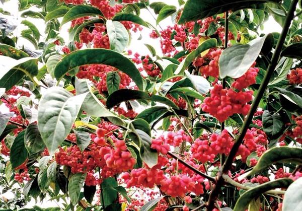 凯创园林景观树行道树3.jpg