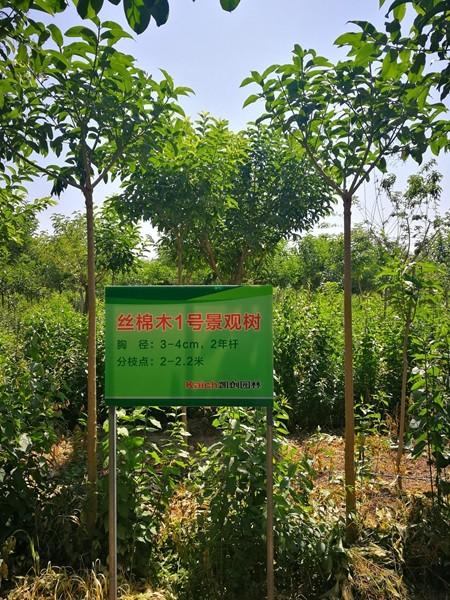 山东淄博凯创园林绿化苗木1.jpg