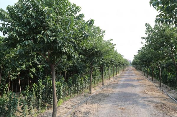 山东凯创园林园林绿化1.jpg