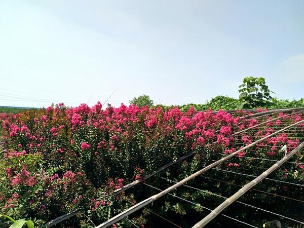 山东凯创园林园林绿化2.jpg