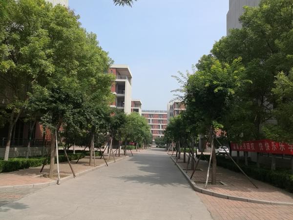 厂区绿化园林绿化通用树种1.jpg
