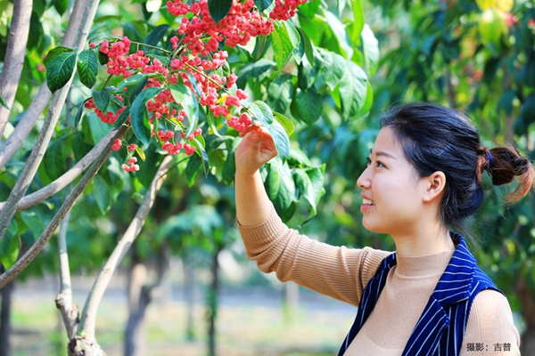 厂区绿化园林绿化通用树种3.jpg