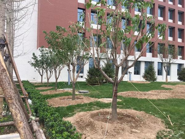 厂区绿化园林绿化通用树种4.jpg