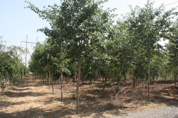 山东淄博园林公司种植基地1.jpg