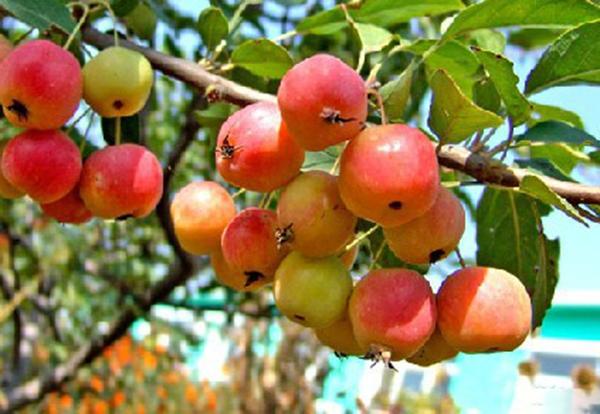 山东淄博园林公司景观树2.jpg