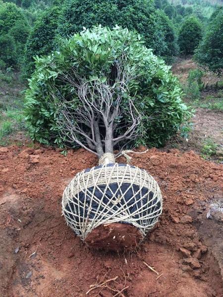 园林绿化工程2.jpg