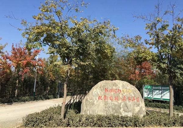 山东淄博凯创园林4.jpg