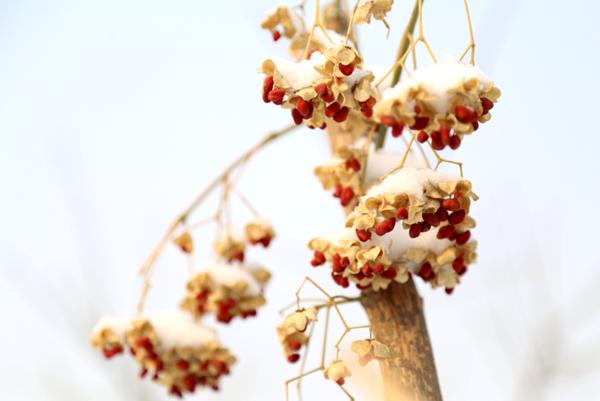 山东淄博凯创园林景观树3.jpg