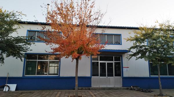 厂区绿化五角枫5.jpg