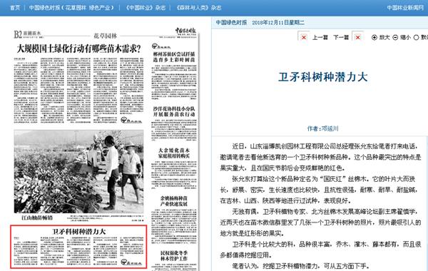 山东淄博凯创园林国庆红大叶丝棉木1.jpg