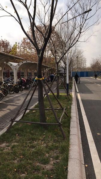 山东淄博凯创园林苗圃3.jpg