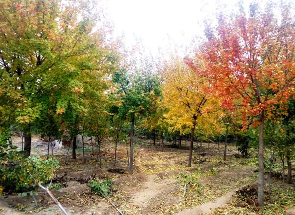 山东淄博凯创园林2.jpg