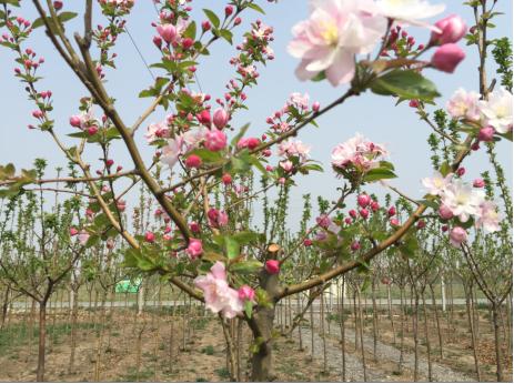 巧谈春季苗木养护的技巧